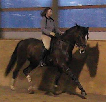 Petra training a Grand Prix horse